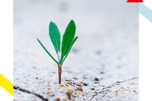 Why defying human instinct could be the key to growth