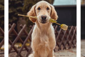 How a pet pooch can change your life