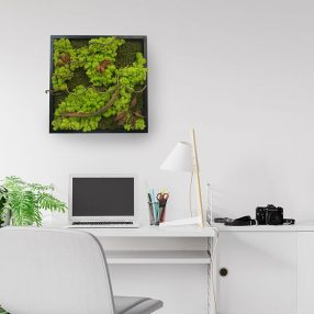 Win a Plant Designs moss frame worth £225